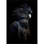 Cockatoo Night - Framed Canvas Print
