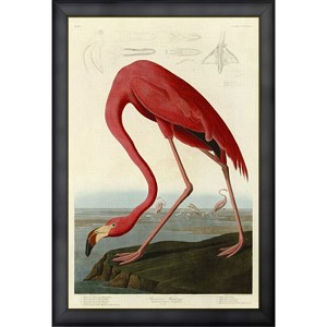 Bird Series Flamingo