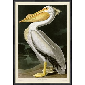 Bird Series Pelican